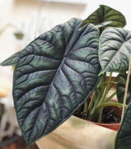 Домашние растения, которые любят тень
