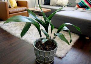 Домашние растения, любящие тень