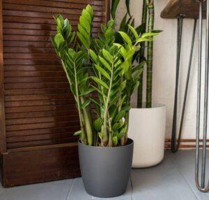 Домашние растения, которые растут в тени